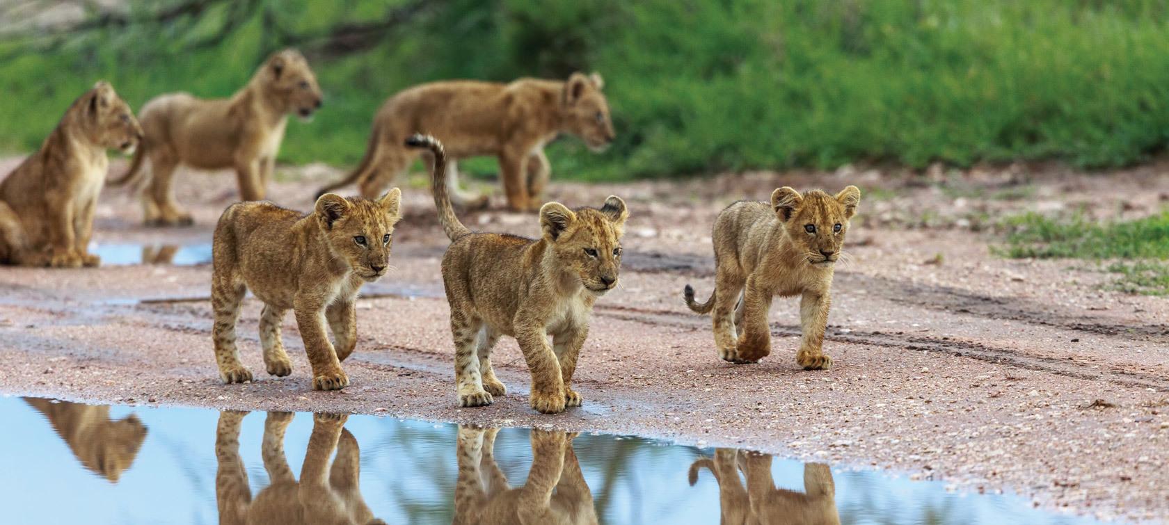 Kenya Amp Tanzania Wildlife Safari A Luxury Small Group