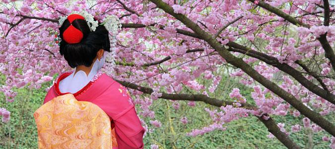 japan-cherry-blossom-inset1.jpg#asset:86511