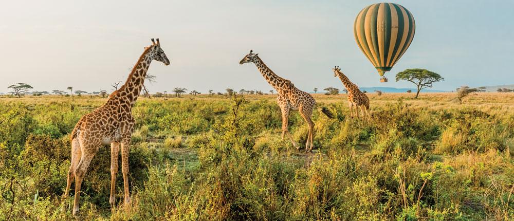 safari-travel-style-inset-v2-6.jpg#asset:80320