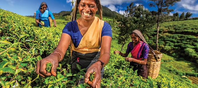 tea-time-sri-lanka-news-inset5.jpg#asset:86403