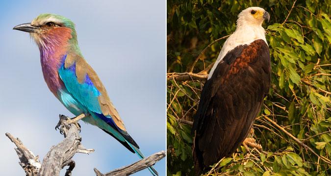 underrated-wildlife-inset4.jpg#asset:86330